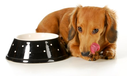 Best Dog Food For Treating Dog Constipation