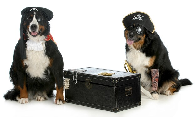 Bernese Mountain Dog Puppies – Man's Best Friend