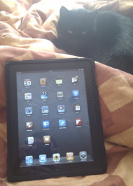 My iPad and my cat