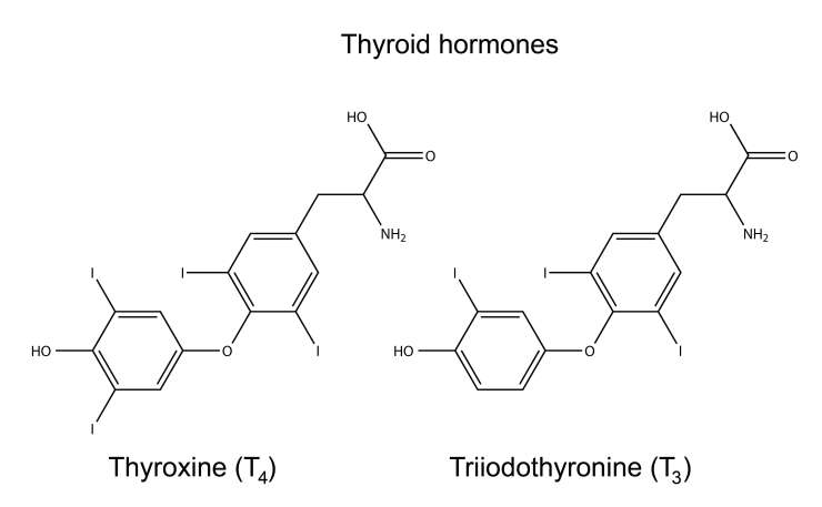 Thyroid Hormones DPC