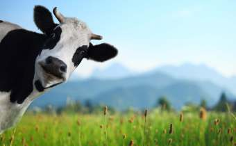 The Bovine Guide to Healthy Eating