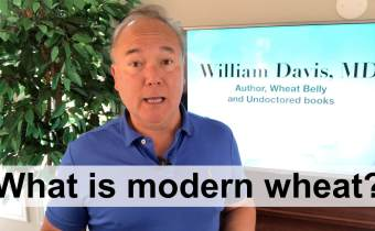 What is modern wheat?