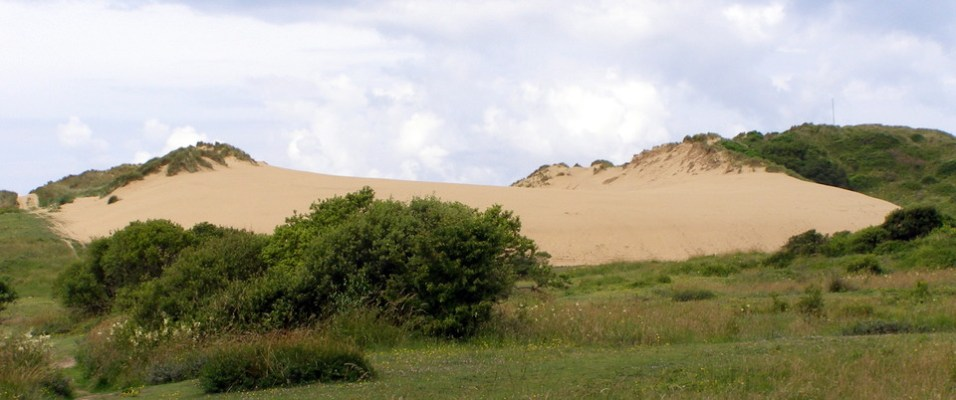 Dune at Braunton Burrows