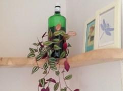 gin plant, Balebarn Eco Lodge