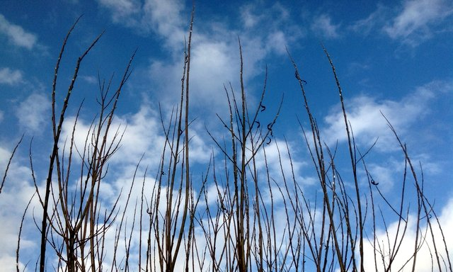 Willow and blue skies at Wheatland Farmecolodges