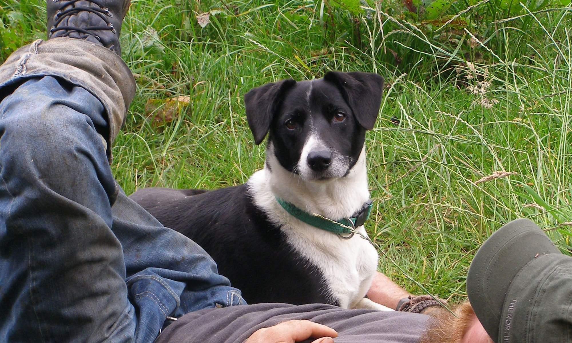 Muttley, from Wheatland Farm's dog friendly holiday lodges in Devon