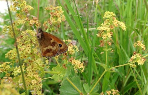 Gatekeeper, Wheatland Farm Devon