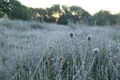 Frosty grasslands, Wheatland Farm Devon