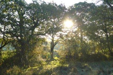 Sun shining through woods on Popehouse Moor SSSI, Wheatland Farm Devon
