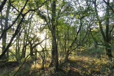 Sun shining through woodland on Popehouse Moor SSSI, Wheatland Farm Devon