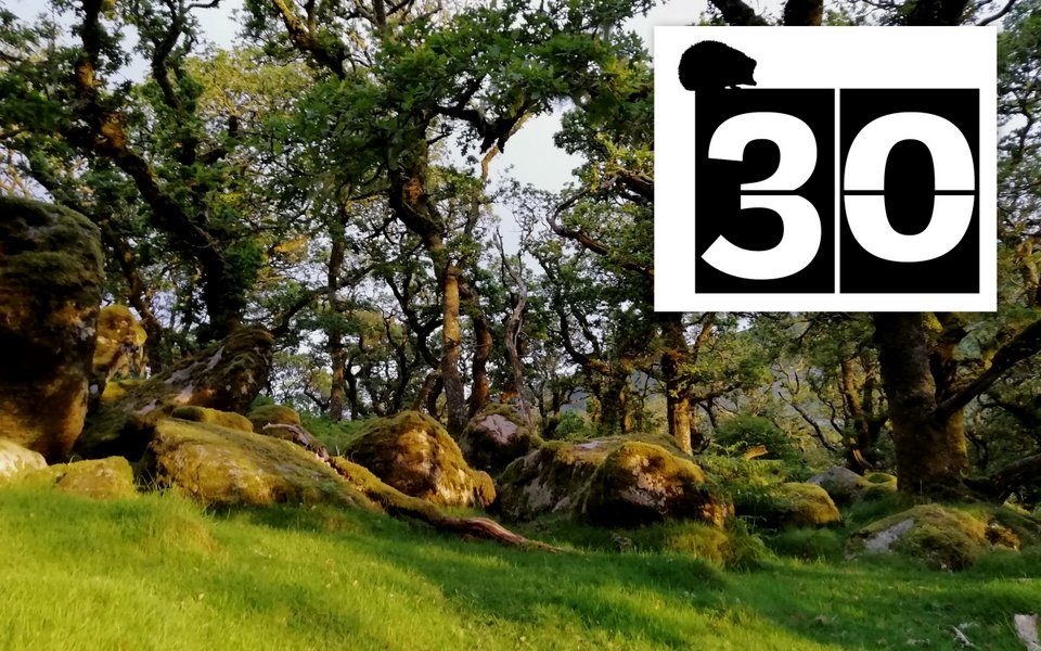 #30DaysWild No. 30 Wild Camping on Dartmoor - Wheatland Farm