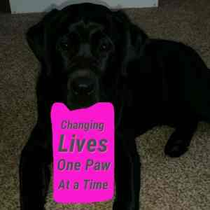 the-life-of-a-service-dog17