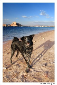 Yup, it's all about the paws. Spring at Lake Powell, AZ