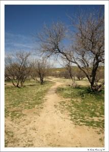 A beckoning trail