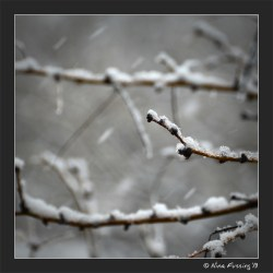 White flakes linger on the mesquite trees