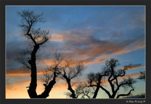 Weather makes for cool sunsets in the cottonwood trees