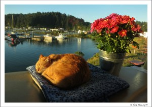 Now, that's a happy cat...and a pretty neat view too!