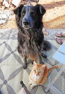 Two peas in a pod -> a little love from the furry bunch