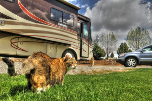 The cats revel in grass