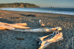 Yup, yet another great beach. First Beach, La Push