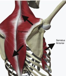 serraturs-anterior-back