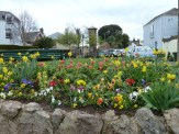 Standing at one end of Shaldon's village green is the clock tower visible in the background here, with a multitude of spring flowers prevalent nearby, when we visited. The beach on the Shaldon side of the estuary is just a short walk from here.