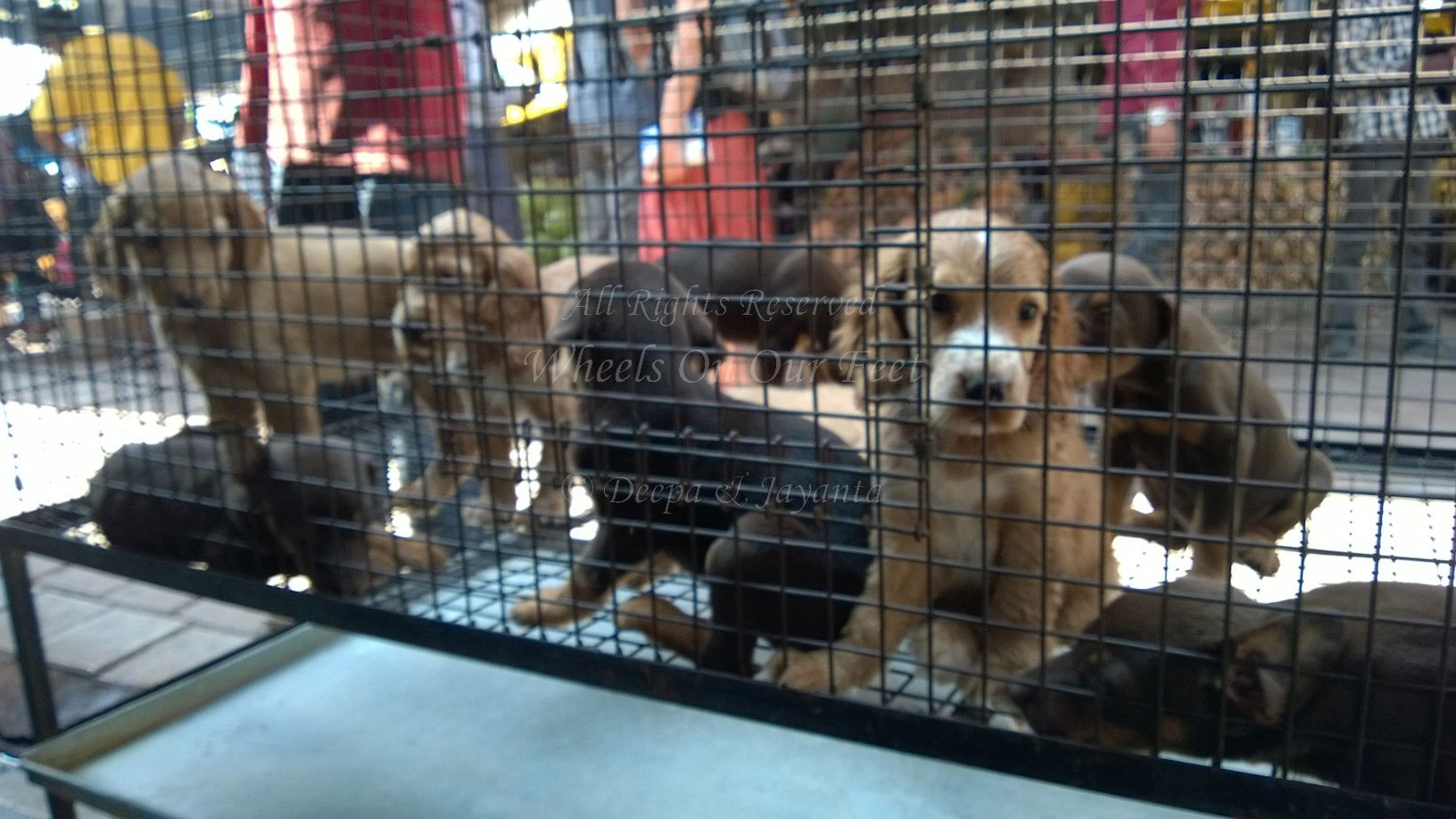 Pet Shops In Mumbais Crawford Market 10 Wheels On Our