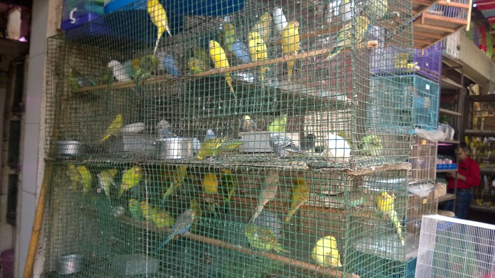 Pet Shops In Mumbais Crawford Market 3 Wheels On Our Feet