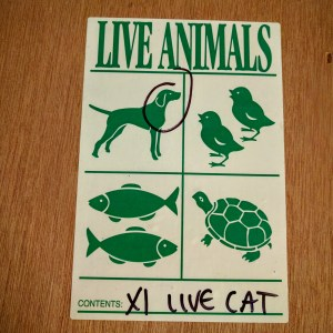 """XL LIVE CAT"" - the indignities.."