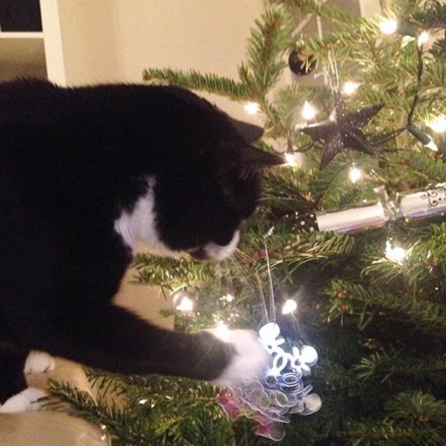 Grateful Christmas, Photosensitivity And Flashing Lights, Christmas plans, Adapting Our Christmas