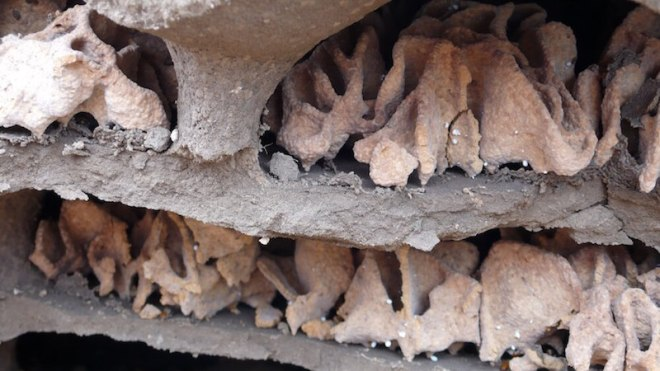 Inside a termite mound, photo by Lisa Margonelli
