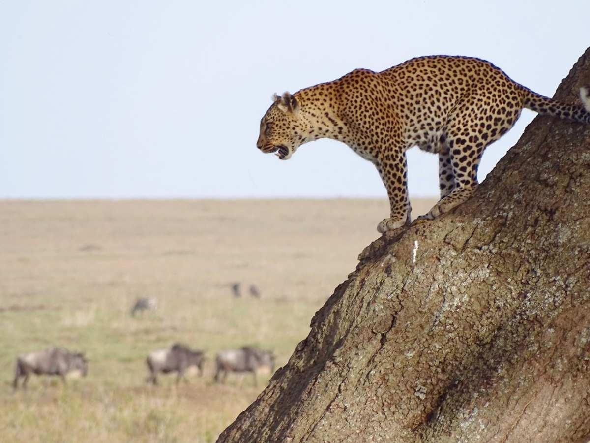 Africa overlanding: first few days and Serengeti safari