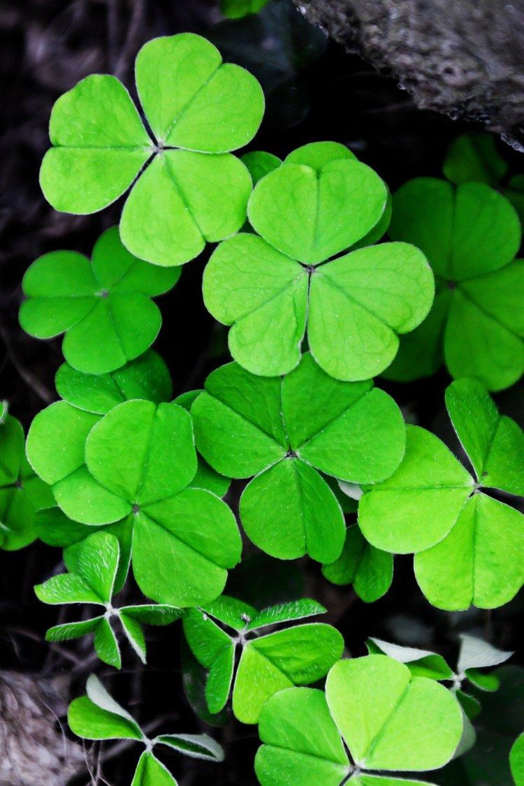 Irish Phrases where is tara povey