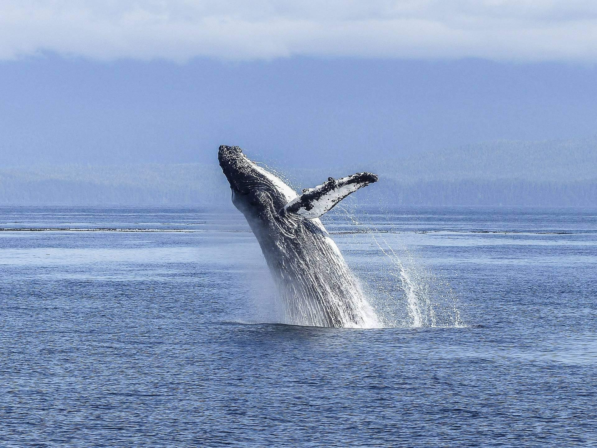 maui hawaii ohana fun where is tara povey irish travel blog