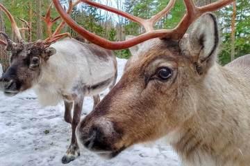 things to do in Espoo Finland where is tara povey top irish travel blogger