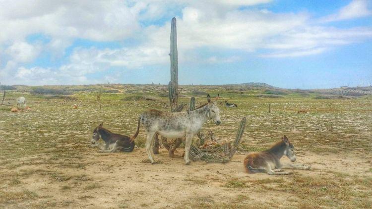 facts about aruba things to do in aruba where is tara povey top irish travel blog