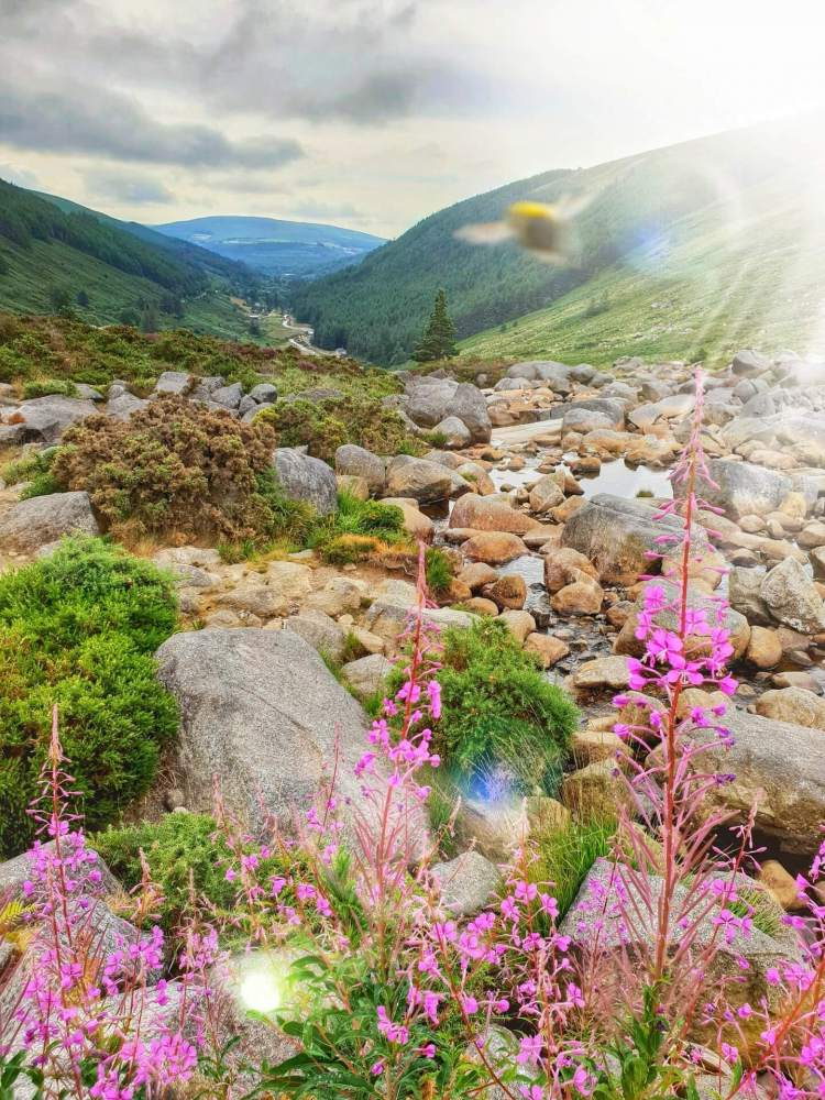 wicklow mountains national park ireland guide where is tara