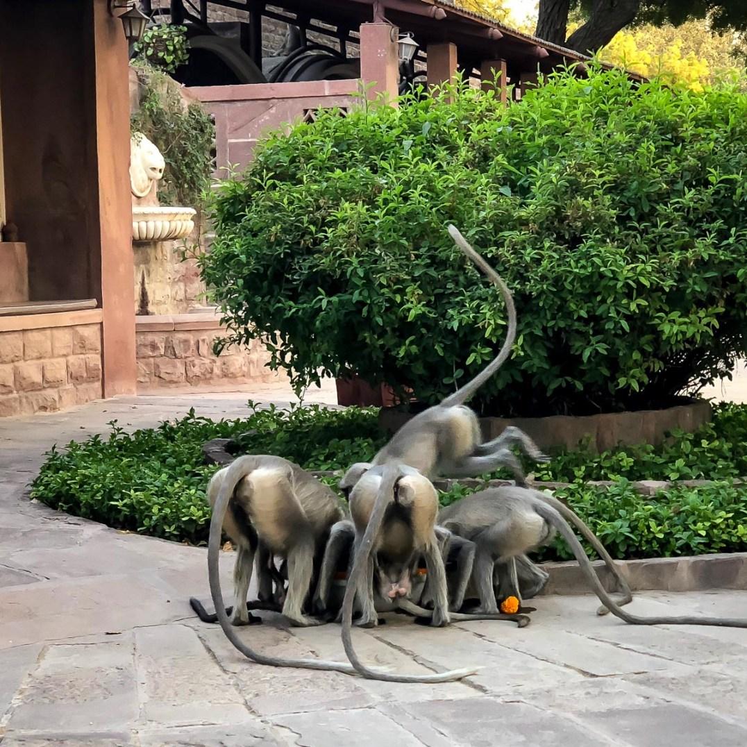 Things To Do In Jodhpur-3806