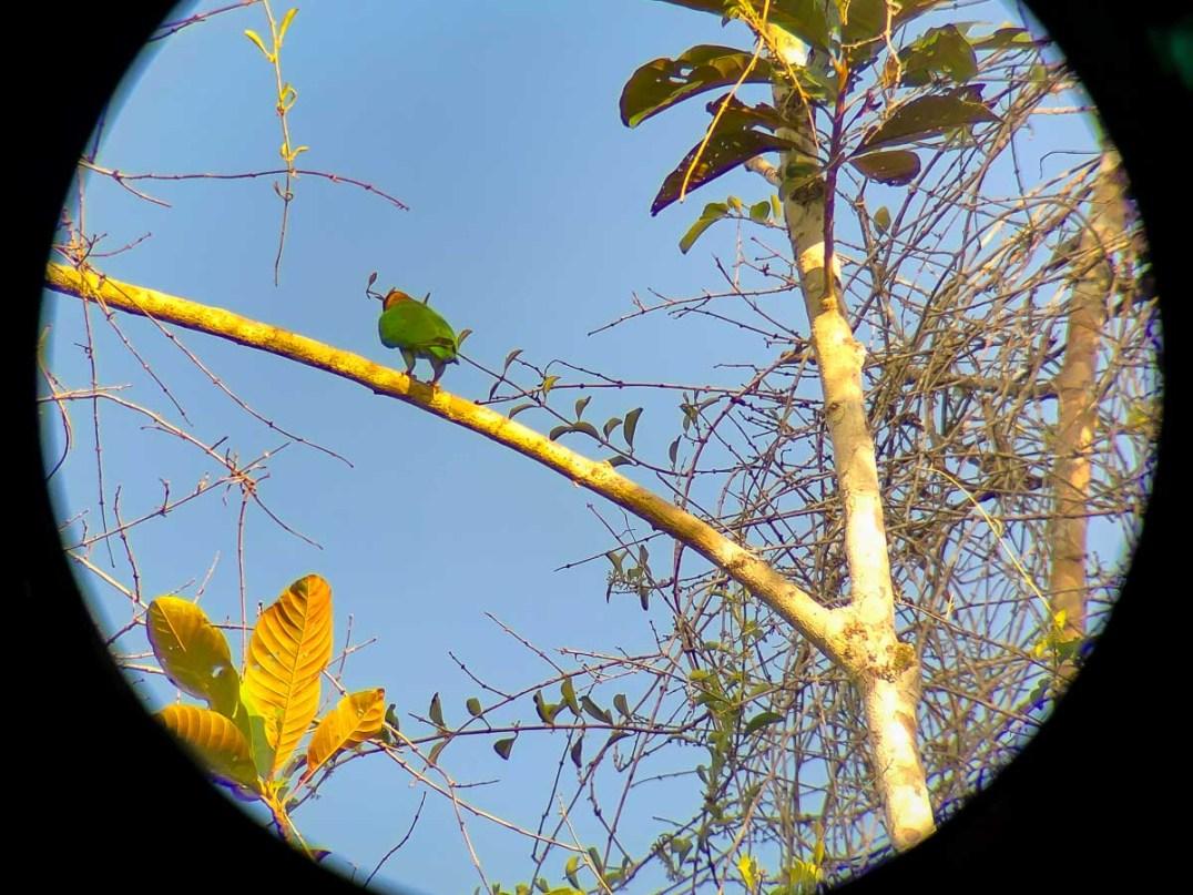 Atta Rainforest Lodge-0084