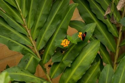 Atta Rainforest Lodge-04296
