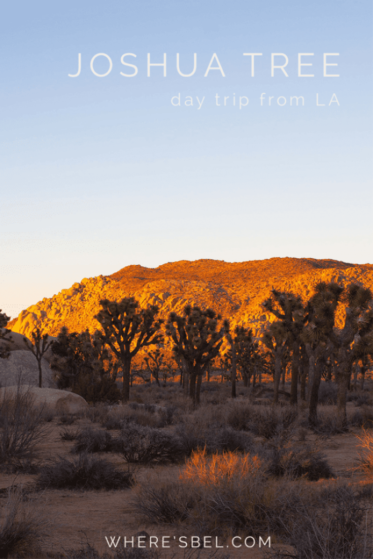 Joshua Tree in one day itinerary