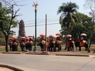 line of elephants at the Elephant kreel in Ayutthaya