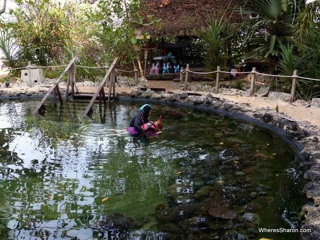 Coral Nursery Andaman Langkawi