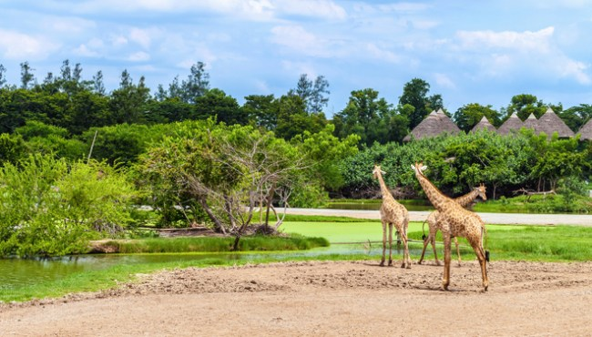 Safari World Bangkok things to do with kids