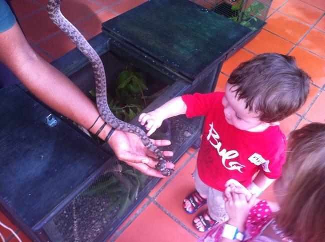 Kula Eco Park – Reptile encounter