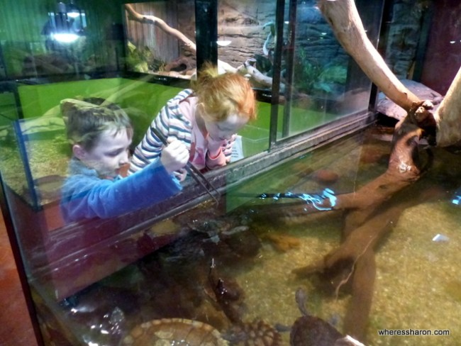 what to do in canberra for kids at the Canberra Reptile Zoo
