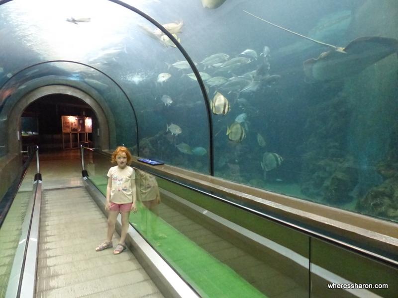 phuket for kids and families at Phuket Aquarium