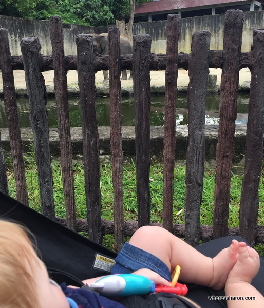 J checks out the elephant enclosure at Taping Zoo. One of the best Taiping tourist attractions.