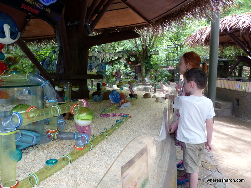 lost world hotel review at petting zoo