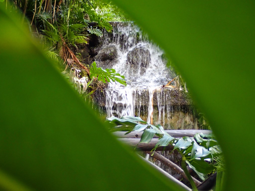 Beautiful botanical gardens are viewed from nature trails winding thru Chankanaab Beach Park in Cozumel Mexico.